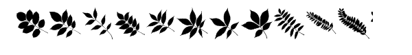 More Leaves UL  What Font is