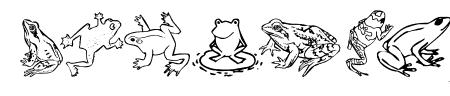 Amphibia Sample