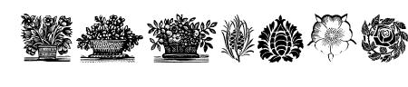 PlantenNBlomen Sample