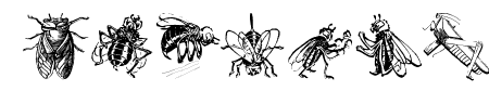 Insects Sample