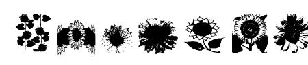 AEZsunflowers Sample
